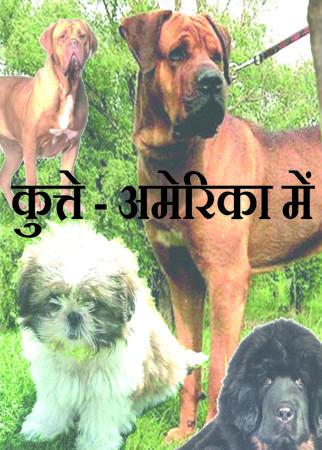 कुत्ते - अमेरिका में