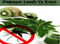 Papaya Leaf Vs Kiwi : Equal Match To Combat Dengue