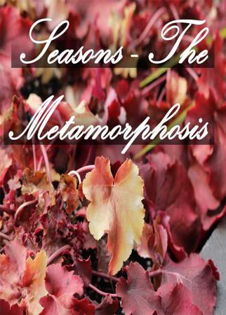 Seasons - The Metamorphosis