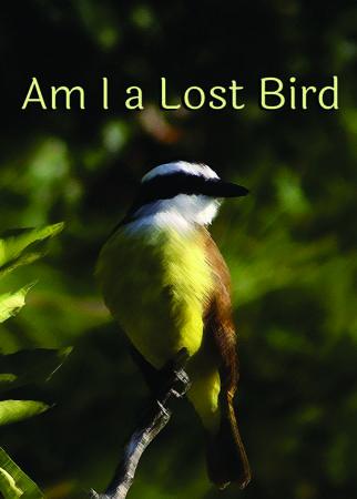 Am I A Lost Bird