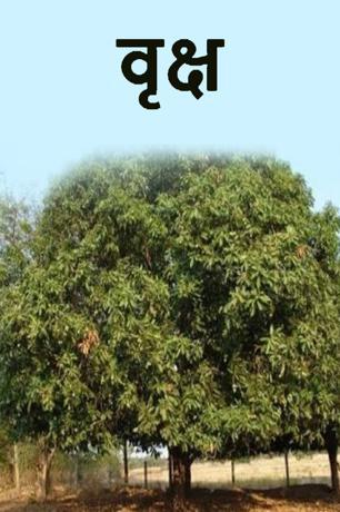वृक्ष