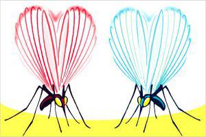 The Raagas Of Mosquitoes