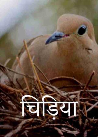चिड़िया