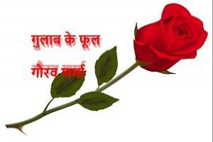 गुलाब के फूल