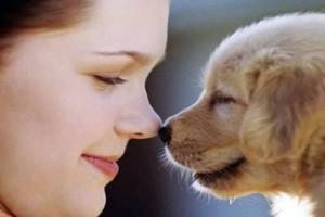 Pets -  Better Than Humans