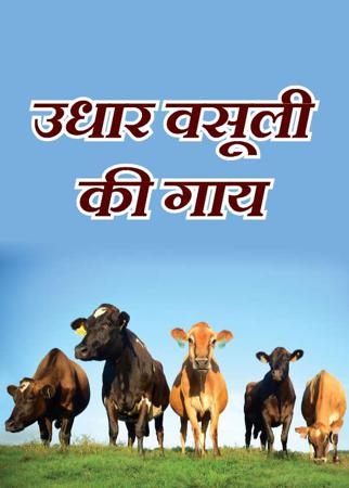 उधार वसूली की गाय