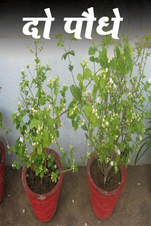 दो पौधे