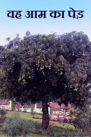 वह आम का पेड़