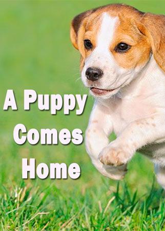 A Puppy Comes Home